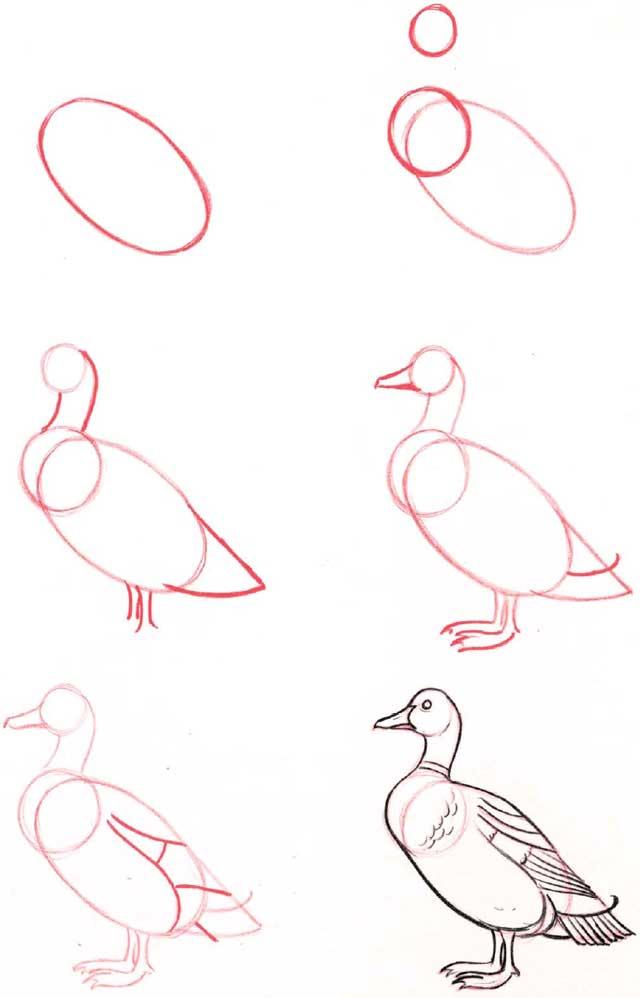 como dibujar paso a paso